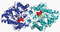 OPH Enzyme Model